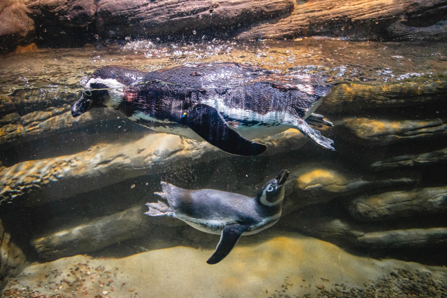 City Tour em Balneário Camboriú - Barra Sul - Oceanic Aquarium e mais...